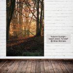 Autumn Sunlight - beech wood, Tunstall - Brian McCabe