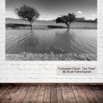 """ Lancaster Canal - Two Trees"" Stuart Fotheringham"